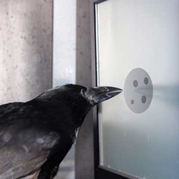 crow counting