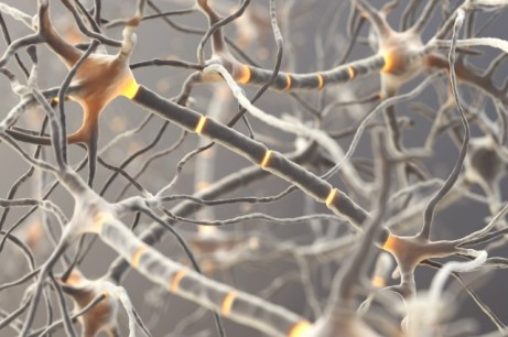 NEURONS shutterstock_133011749