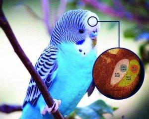 parrot 150624143154_1_540x360