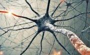 neuron close and deep